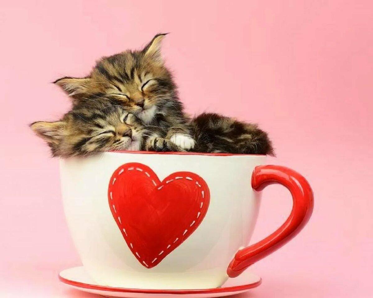 Картинка с котенком и сердцем