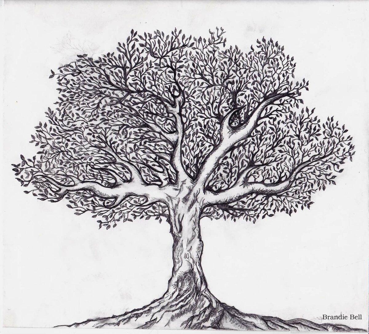 дерево рисунок графика организациях ип, которых