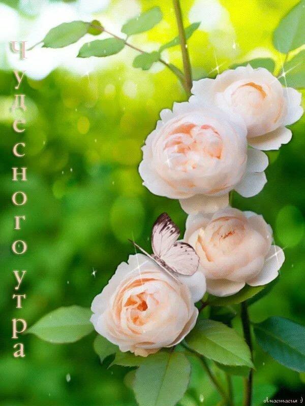 Гиф картинки с добрым утром с розами