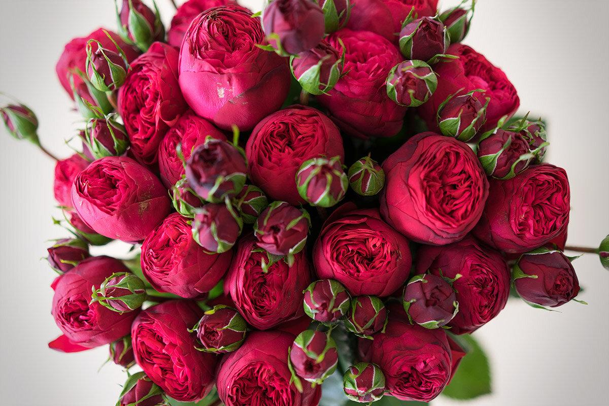 картинка пионообразные розы всех своих мужей