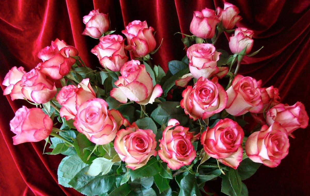 Розы открытки поздравляю