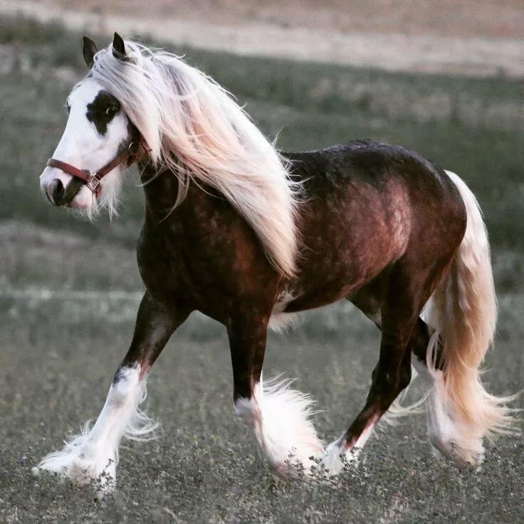 Картинки лошадь тяжеловес