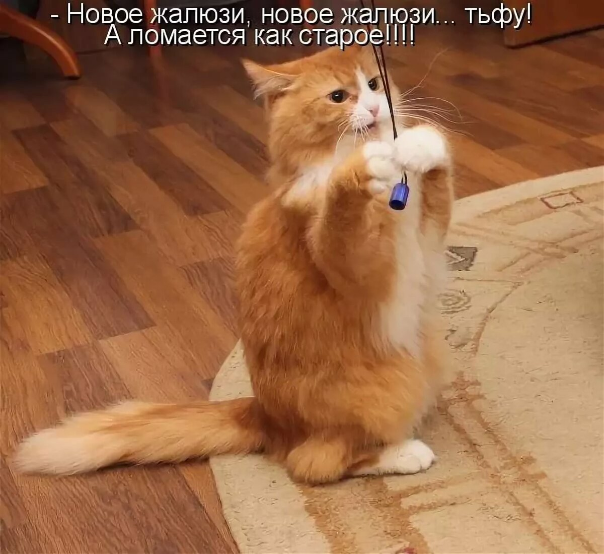Самые смешные картинки про котов с надписями