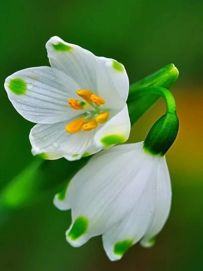 Поздравление для, картинки весенние цветы анимация