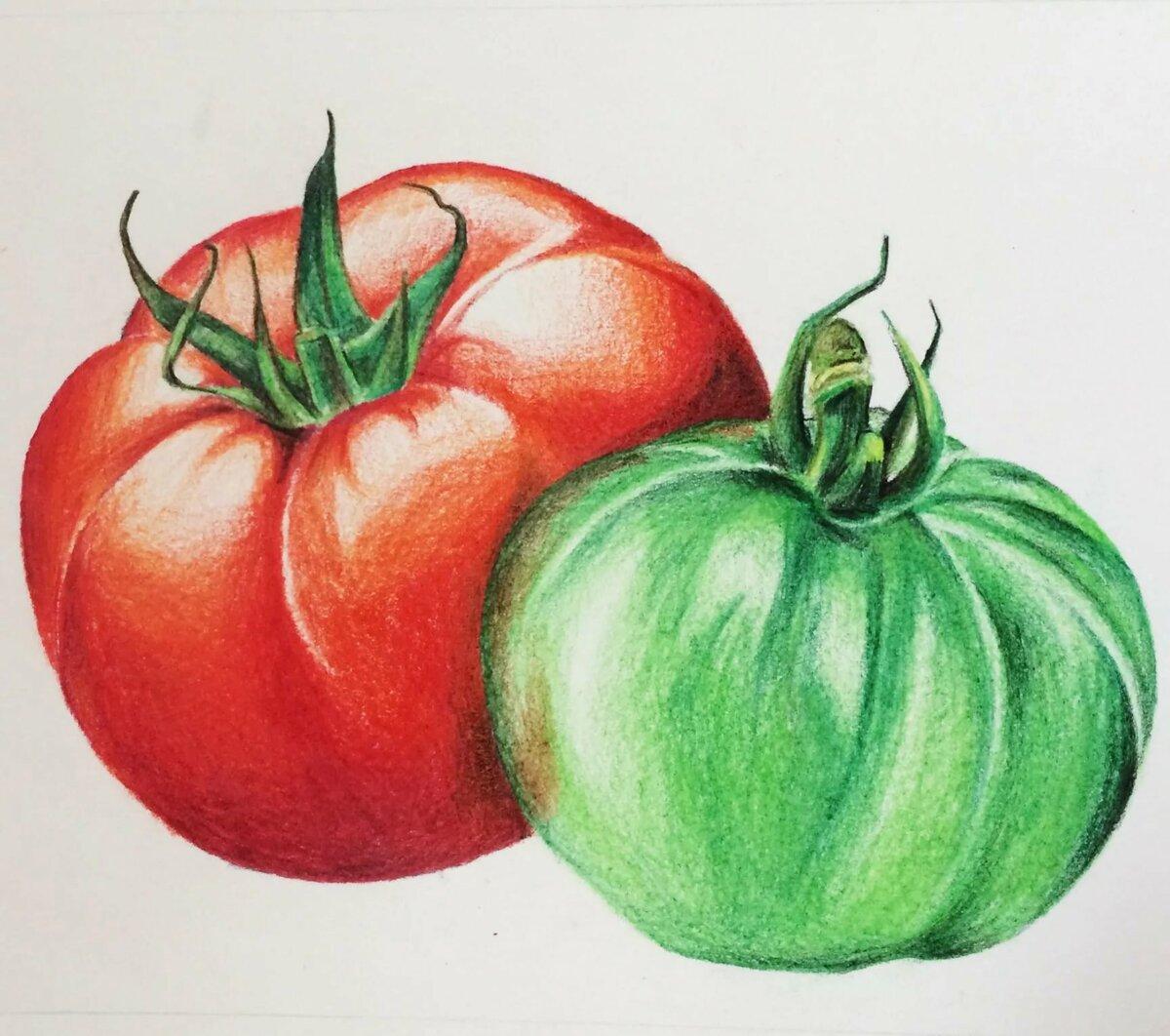 Как нарисовать помидор фото