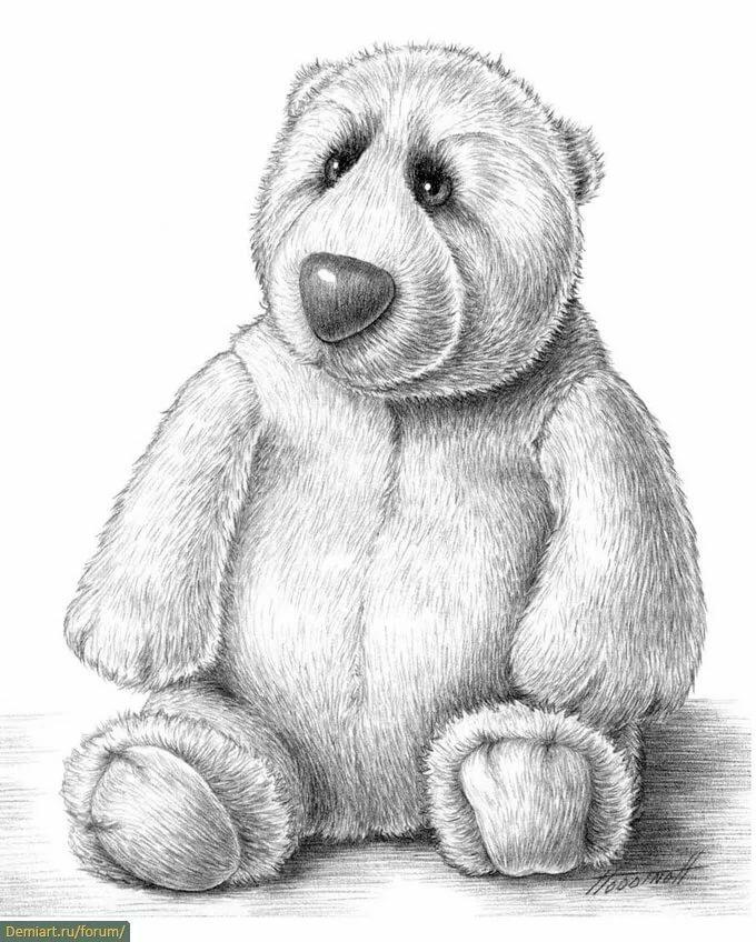 медную медвежонок рисунки карандашом популярный вид перекрытиями