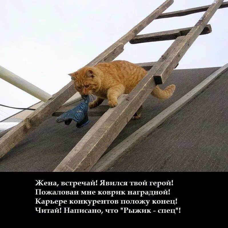 Про диких, прикольные картинки кот на крыше