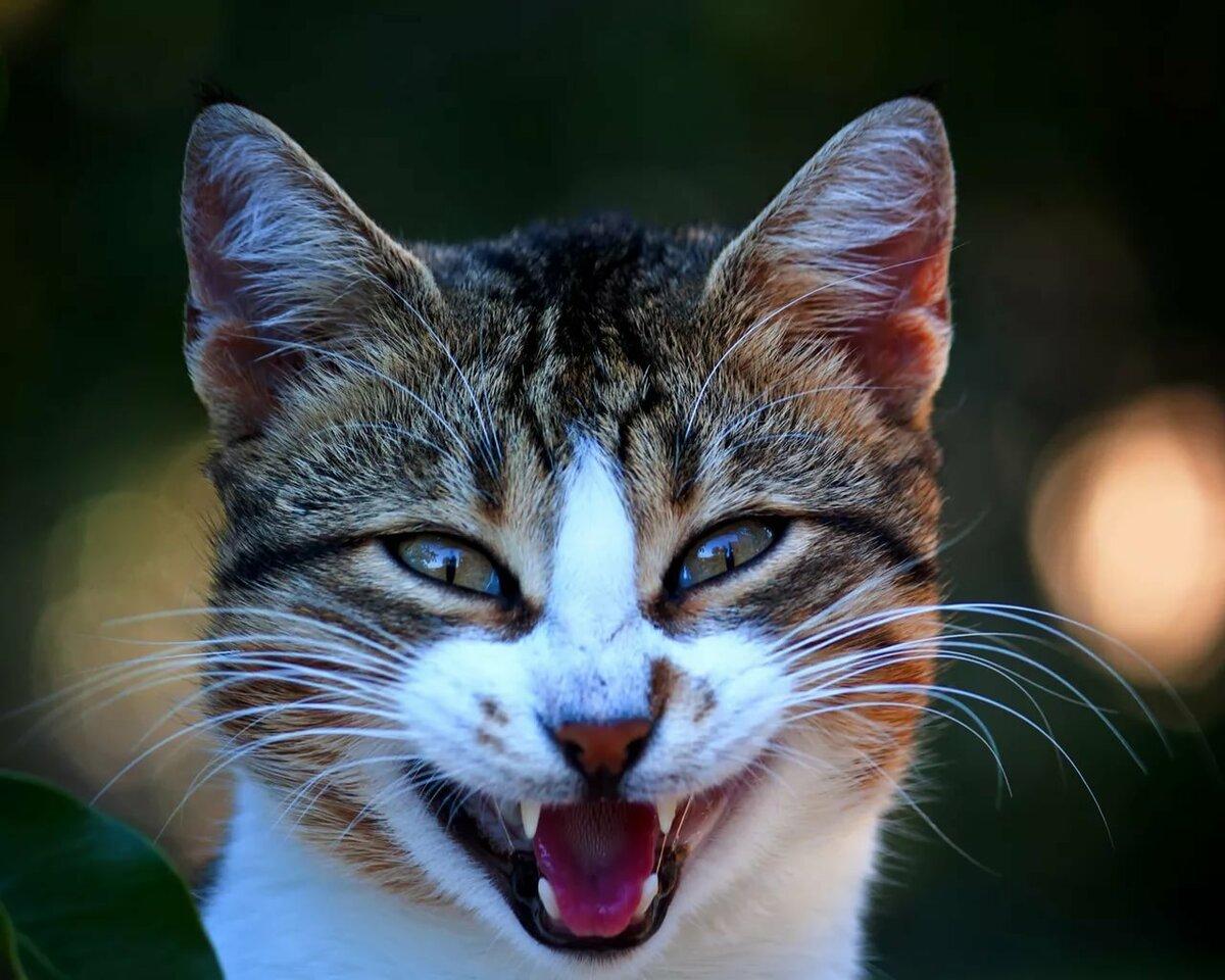 Улыбнись котик картинки