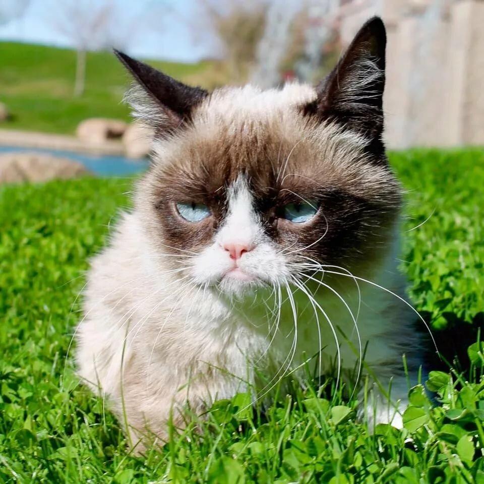 Недовольный кот в картинках