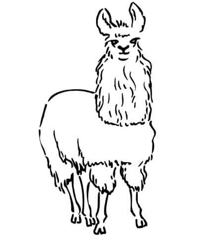 «Раскраска Лама Раскраски для детей печать онлайн ...
