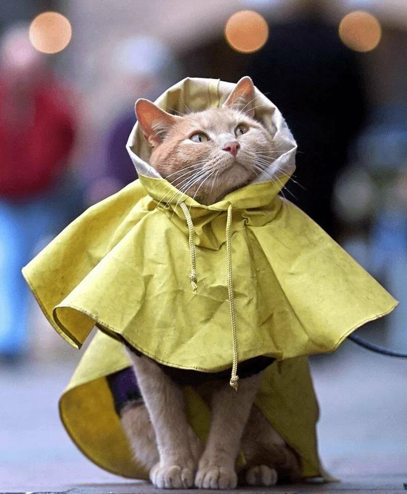 Открытки цена, прикольная картинка про дождик