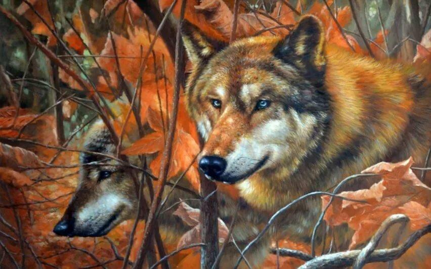 бэнкс осенний волк рисунок хариус