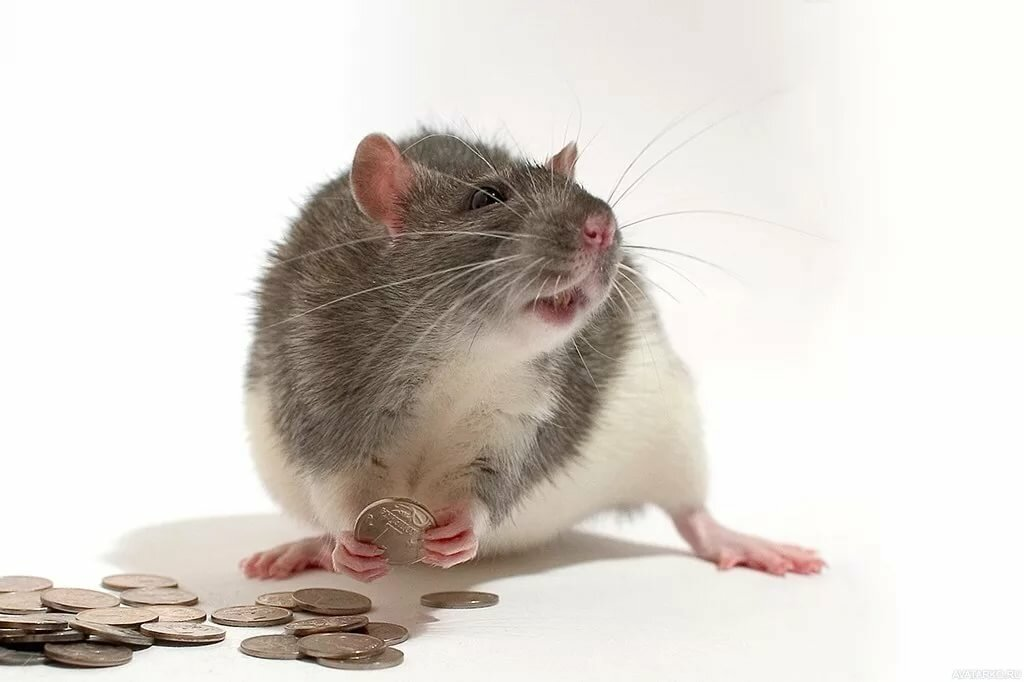 Мамам, смешная мышь картинка