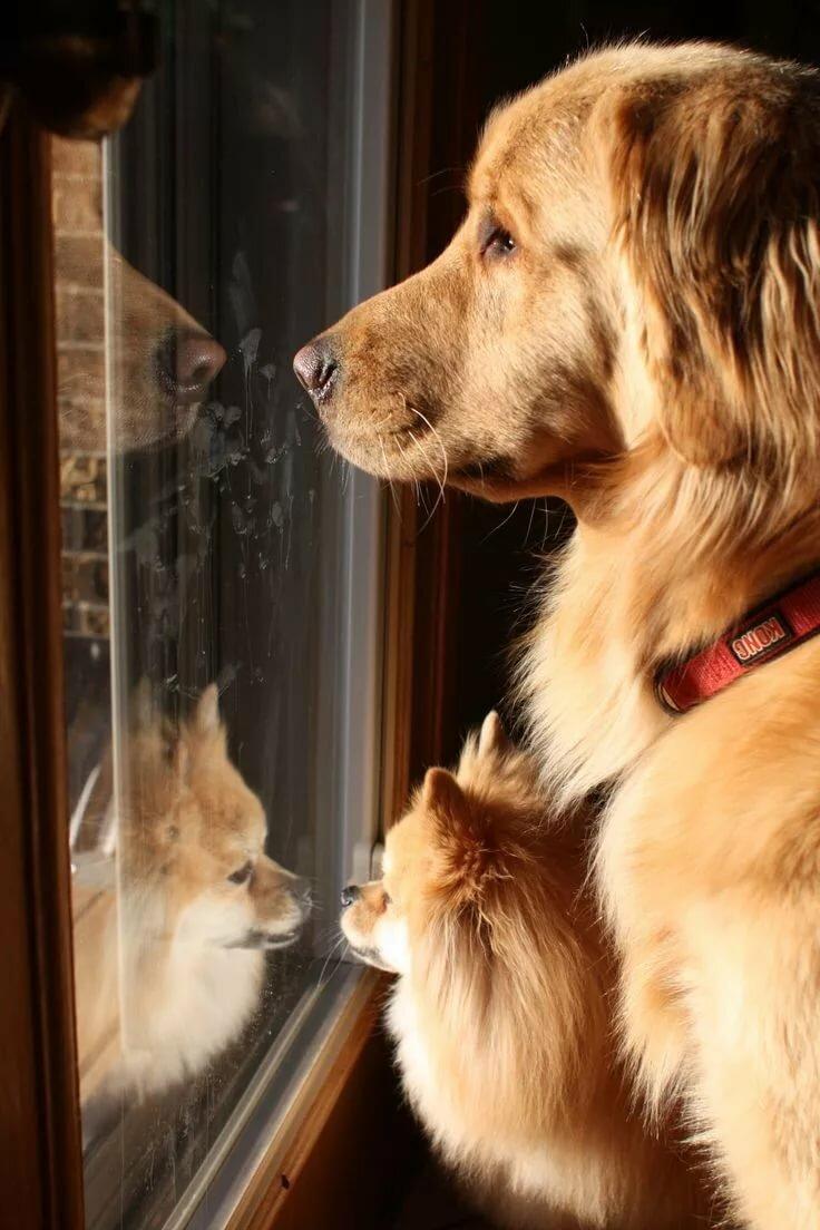 Новогодних открыток, смешные картинки собаки и окна