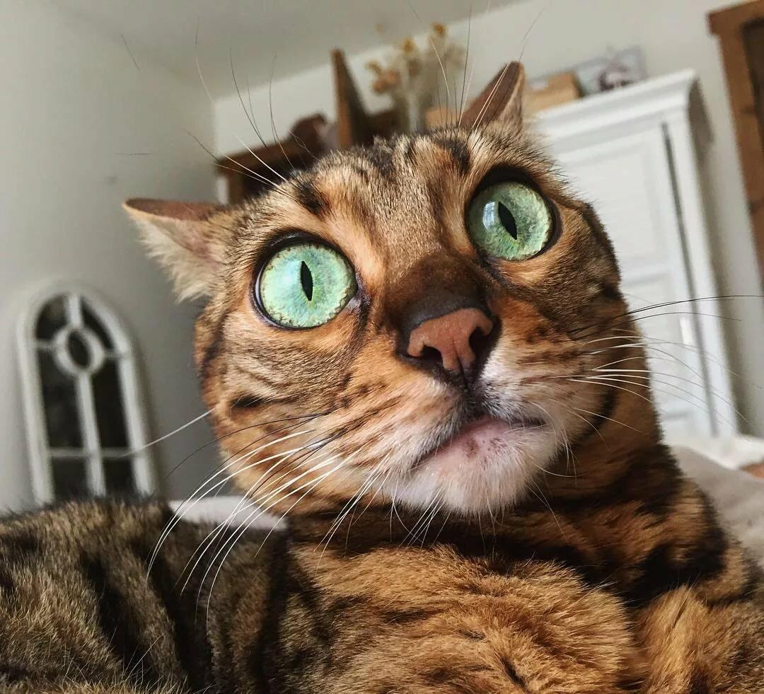 Картинки кошки с выпученными глазами