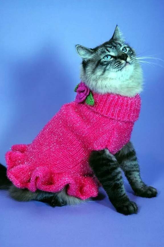 Картинки котята в платьях
