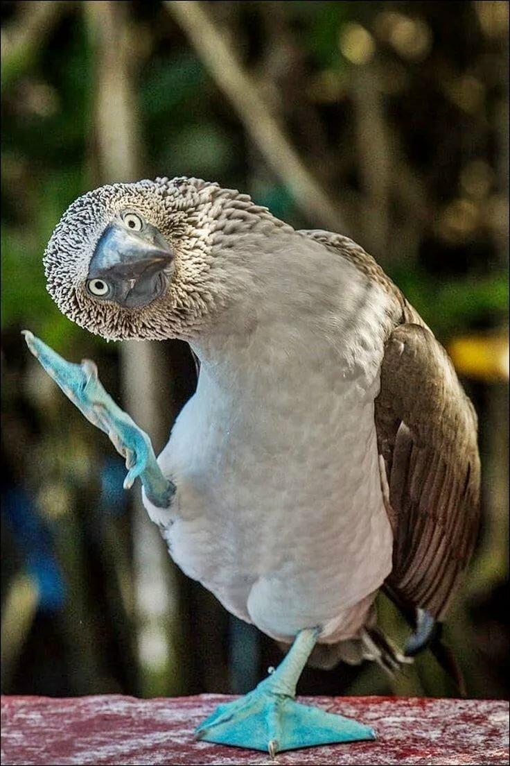 самые смешные птицы мира фото