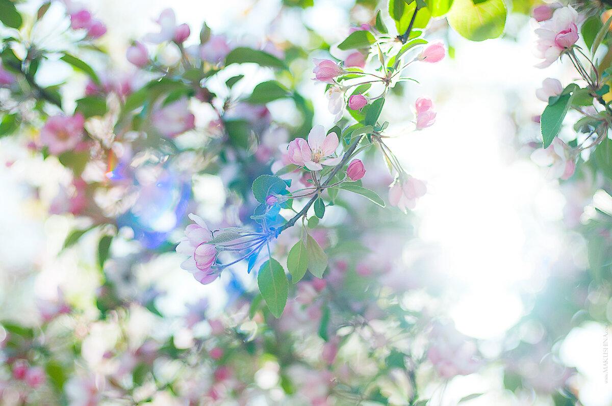 Красивые весенние фоны для фото