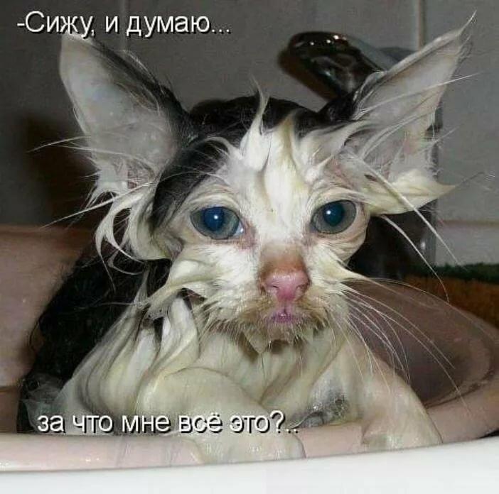 Картинки праздником, смешные фото и картинки с надписями про кошек