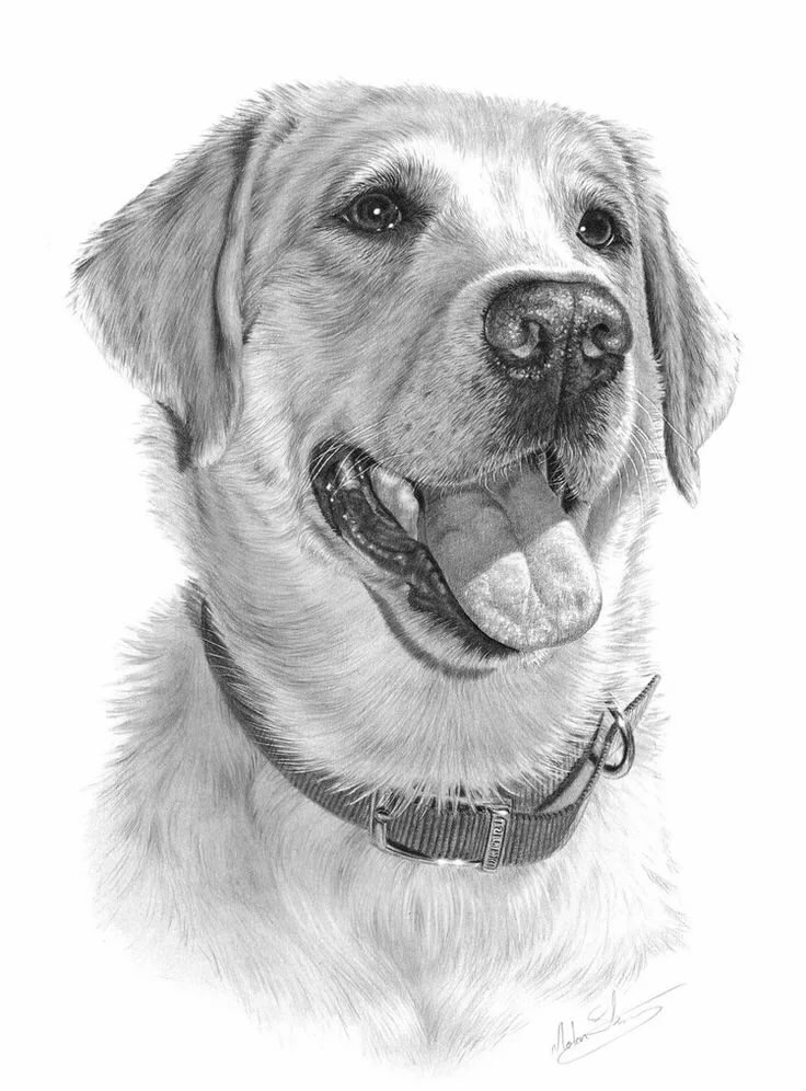 этого картинки для рисования карандашом собак горы надо