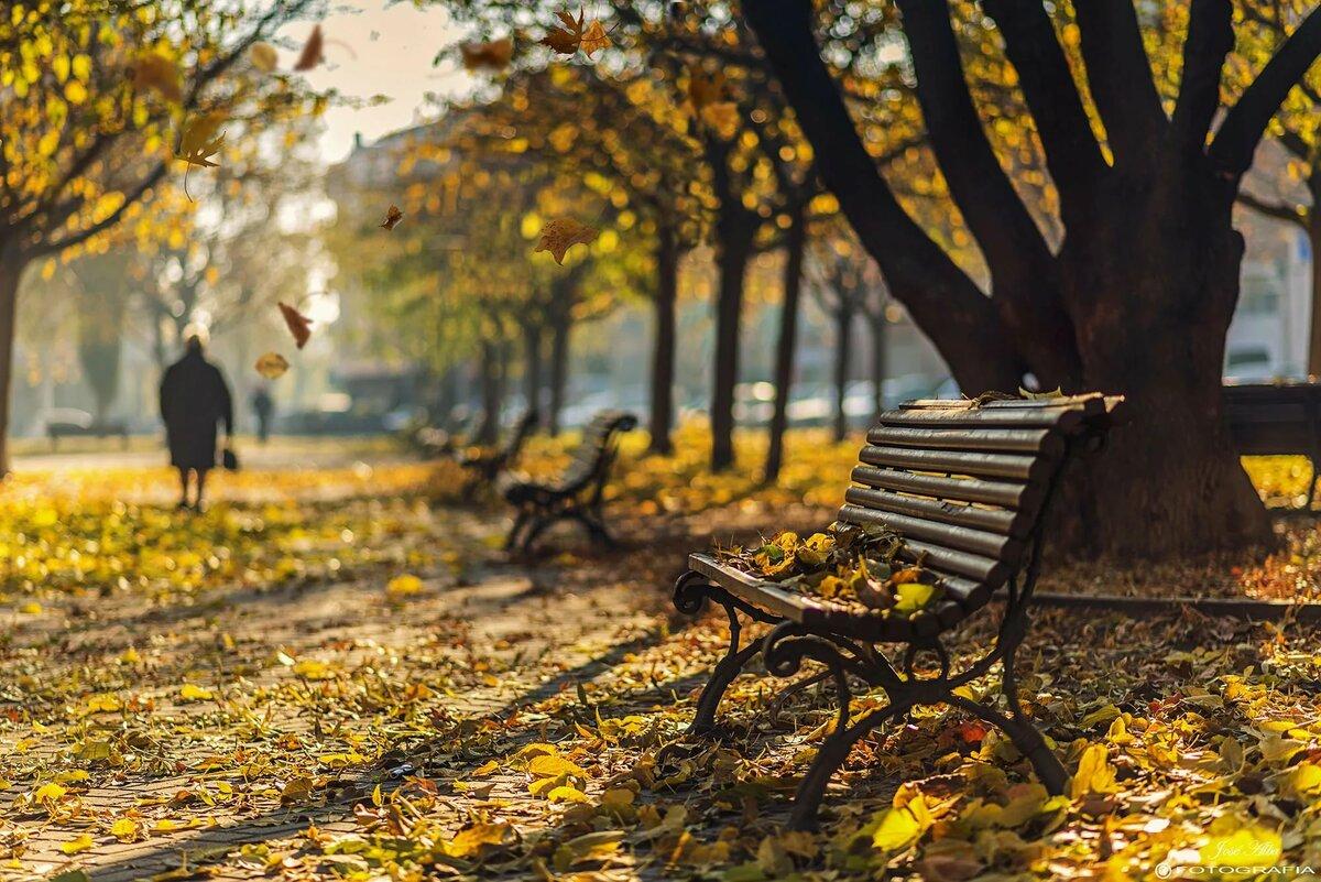 Картинки осень в городе