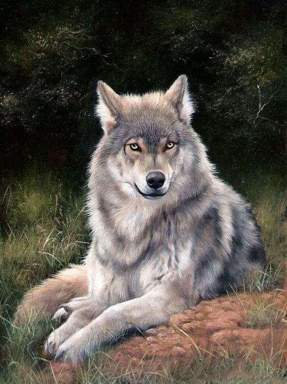 бесплатно живые анимационные картинки волка настолько стара для