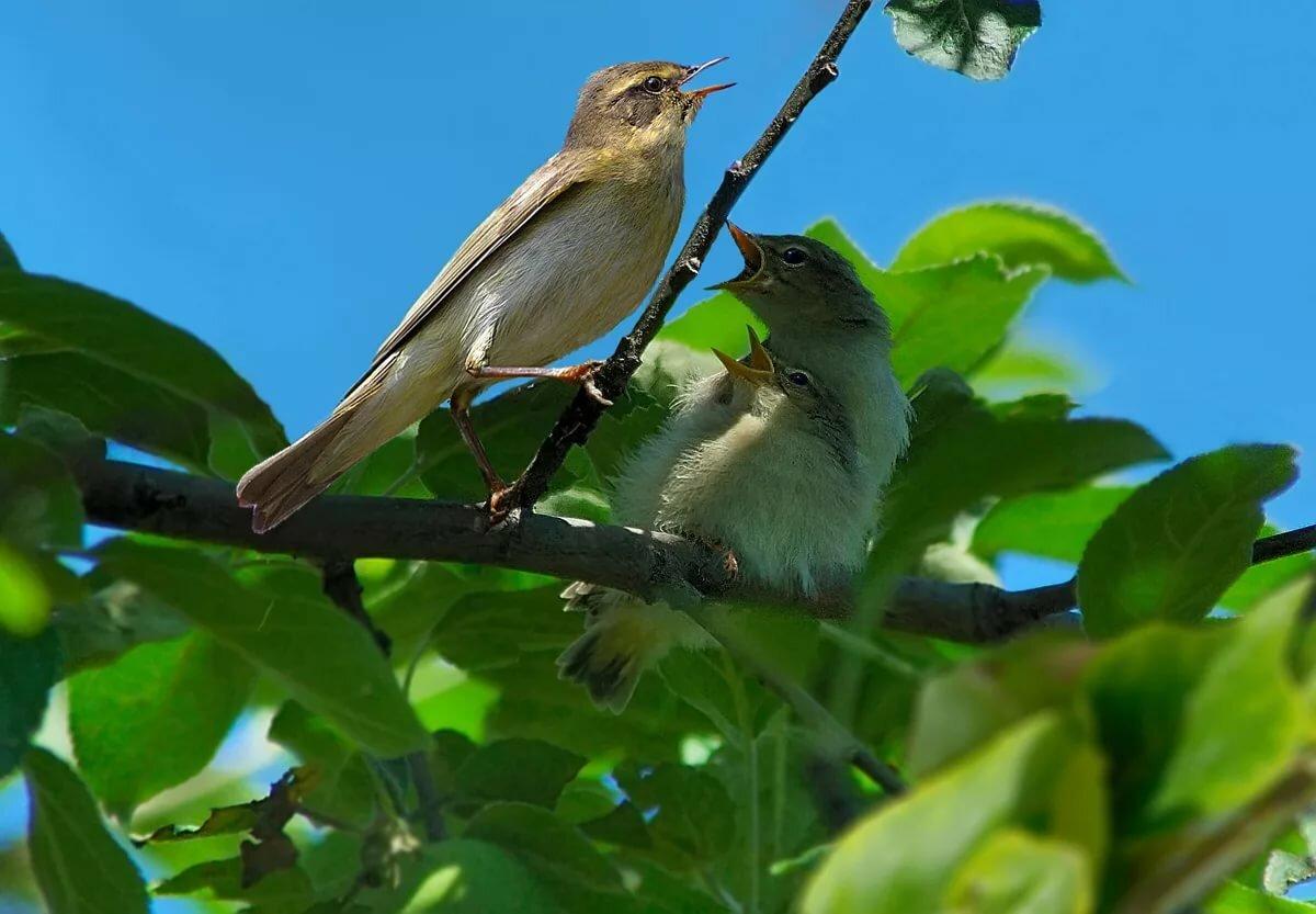 Картинки пению птиц