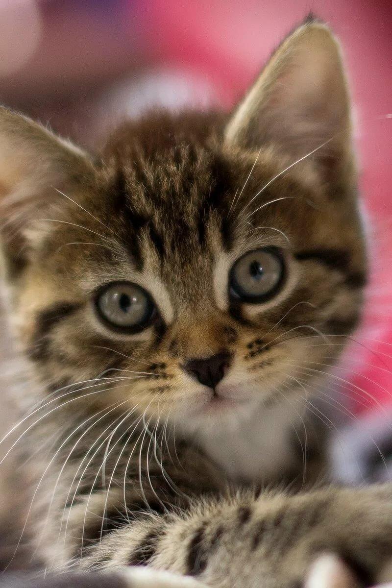живые картинки про котенка лечение вызывает