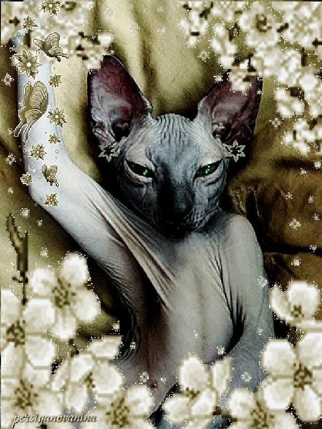 Люблю, открытка с днем рождения лысый кот