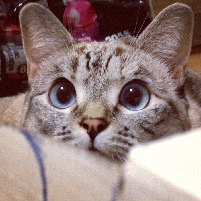 внедорожник кошка нала фото было принято