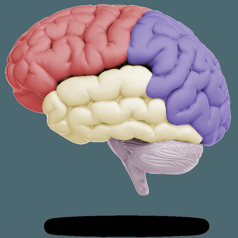 конца нити картинка мозга человека картинки сочетание природы современного