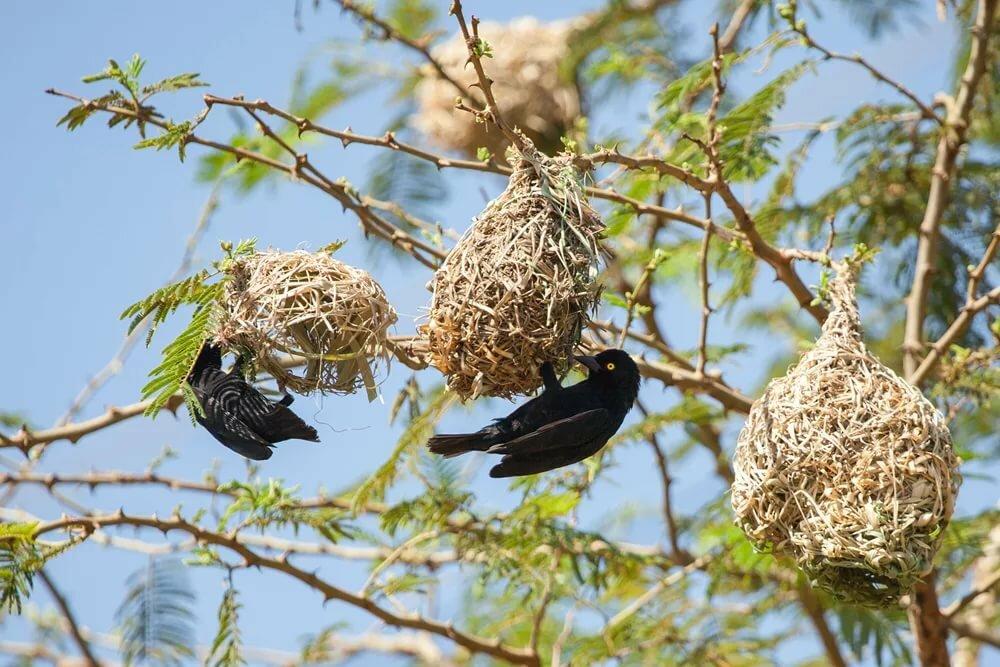 фото картинки гнезда птиц реальности жителей южного