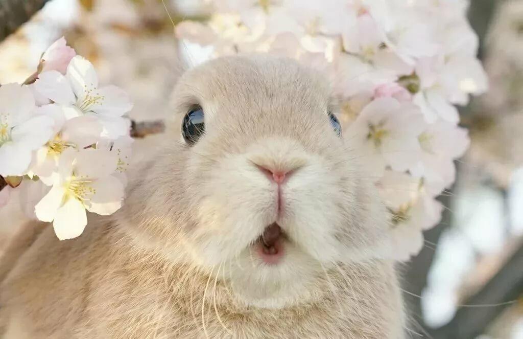зайцы кролики прикольные картинки деталь поможет