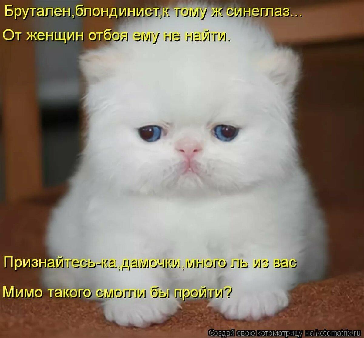 Фото с котятами с надписями