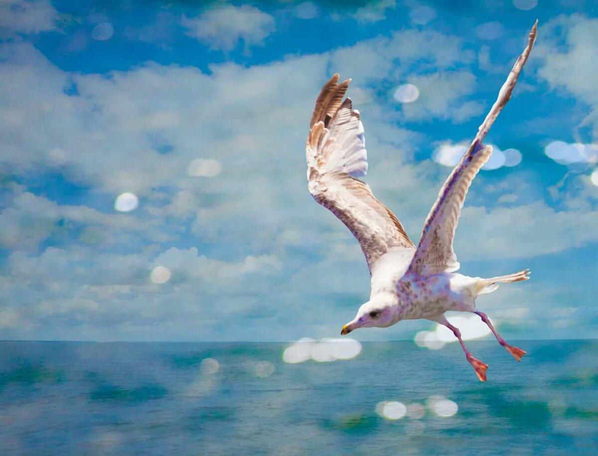 Картинка с чайкой и поздравления, самые