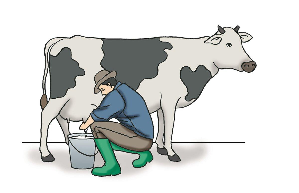 Коровы в картинках ректалка