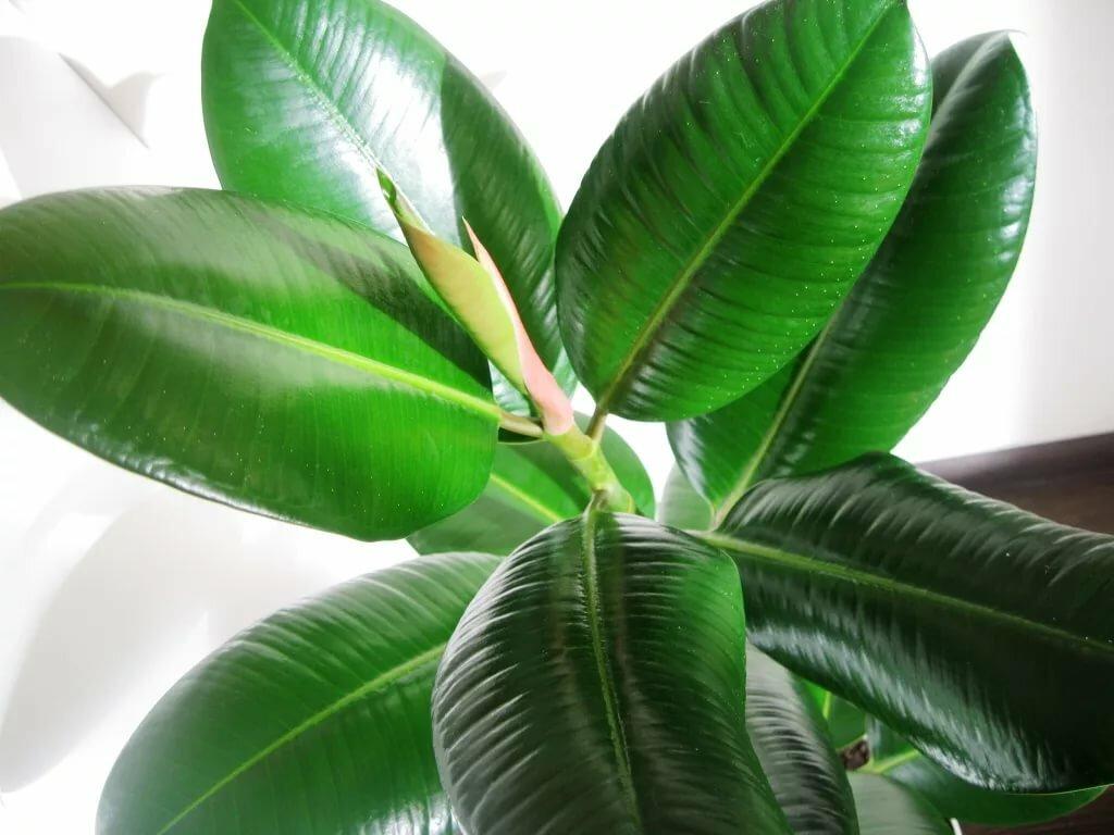 Домашние растения большие фото и названия