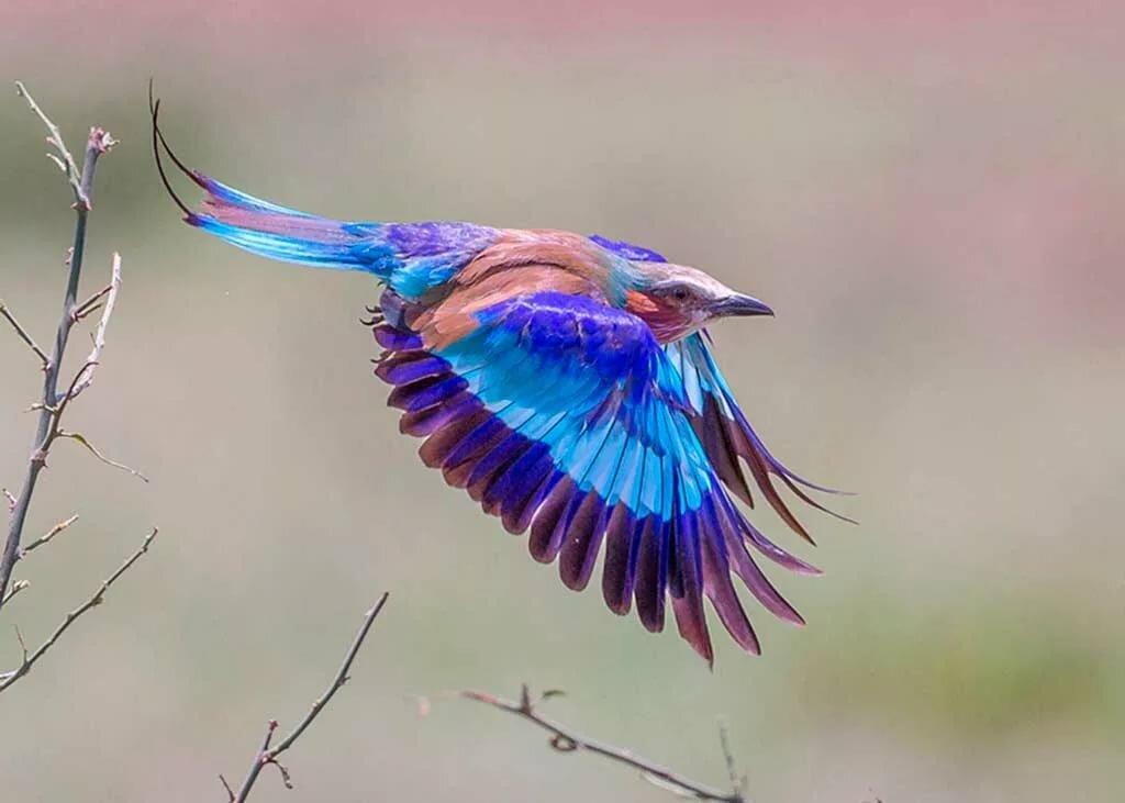 приснились красивые птицы яркие разных цветов закрытой ринопластики нос
