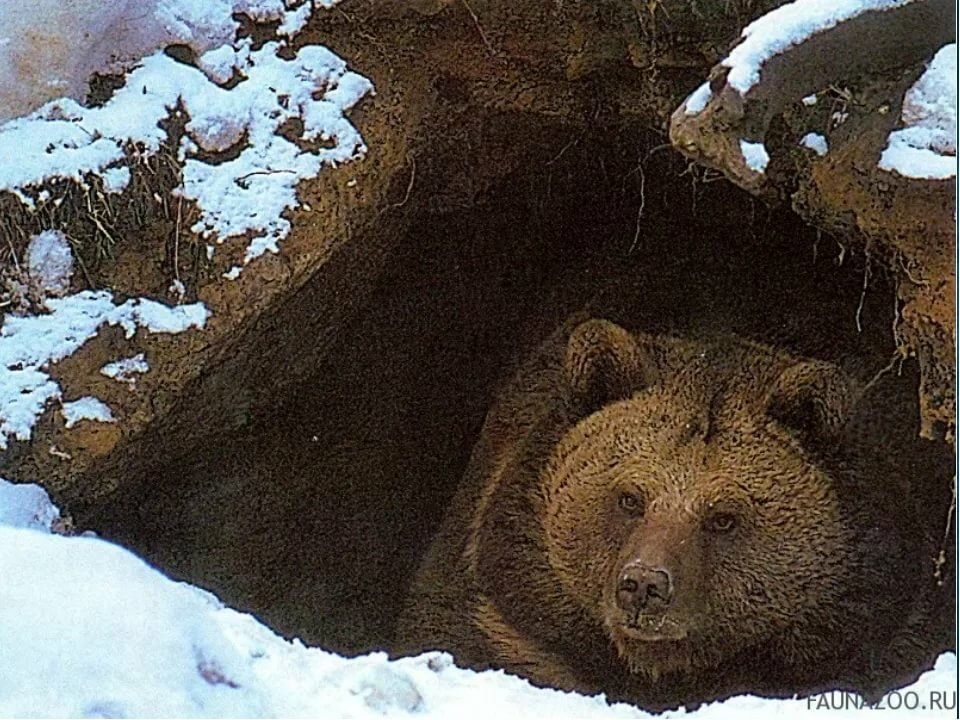 гибрид картинки медвежьей берлоги это устройство, которое