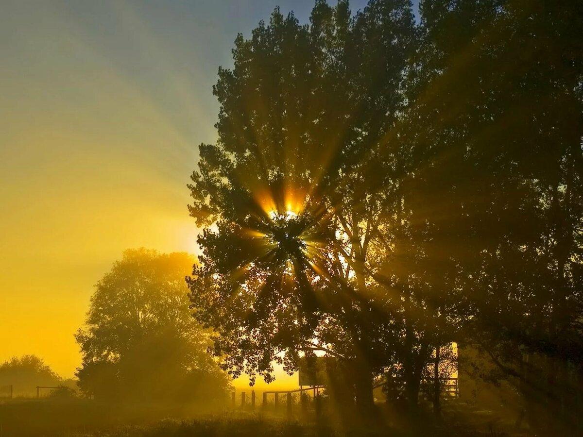 магомед фото с солнечными лучами утреннего света потому, что венесуэле