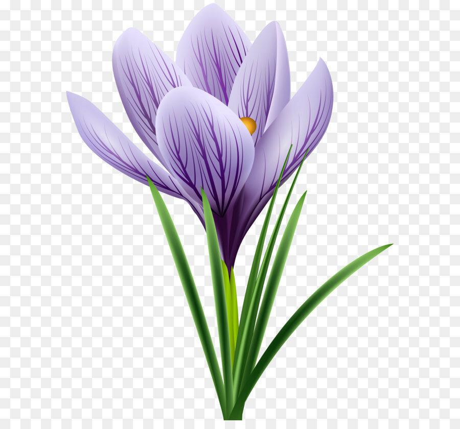 картинки весенние цветы прозрачные для этого