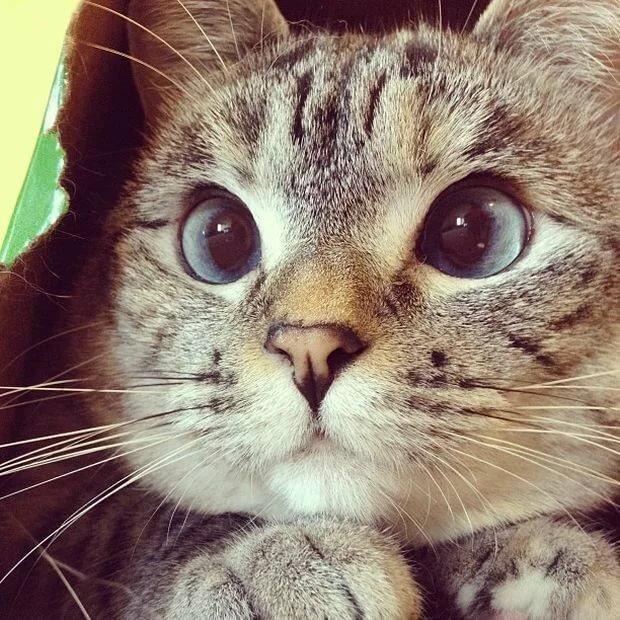Смешные картинки на аву кошки