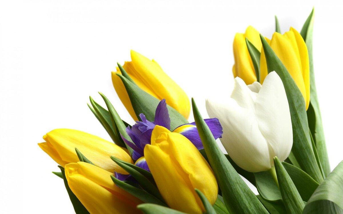 Тюльпаны и 8 марта картинки, новогодней елочкой