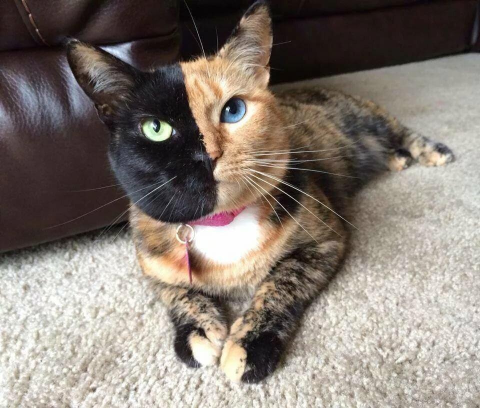 Кошки картинки самые мире смешные