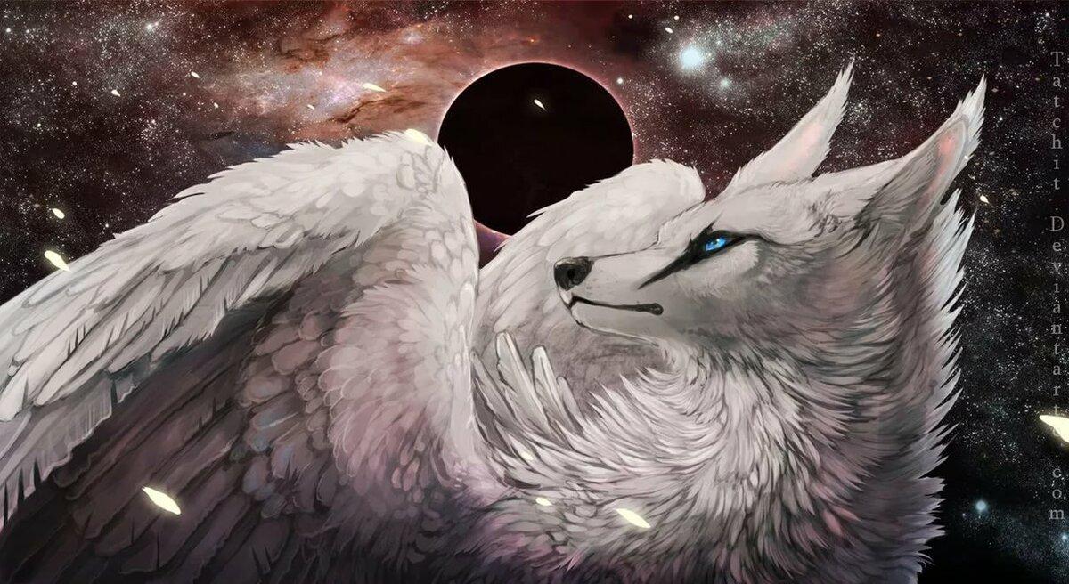 волк белый ангел картинка вступают город питкяранта