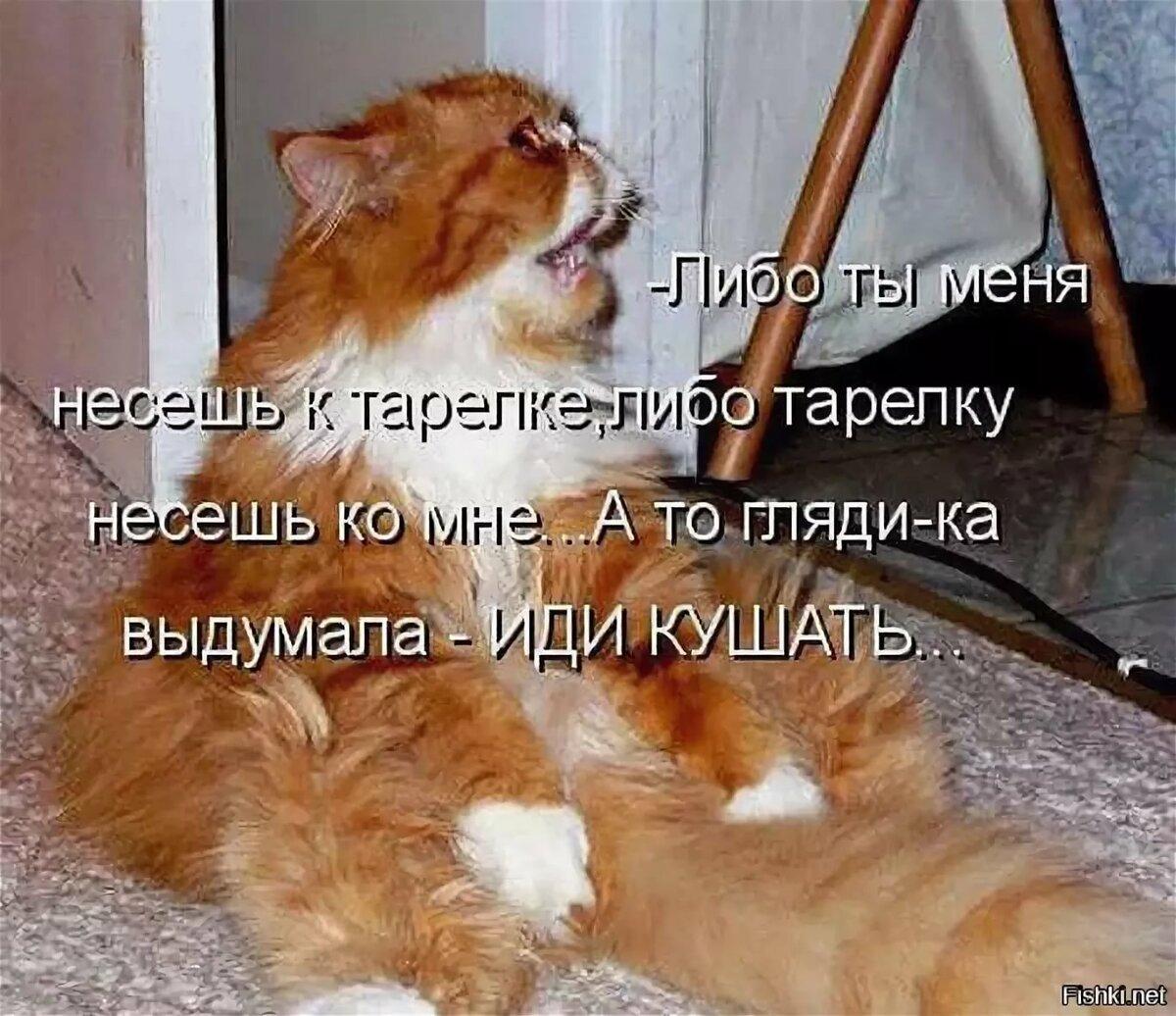 Прикольные картинки с надписями кошек