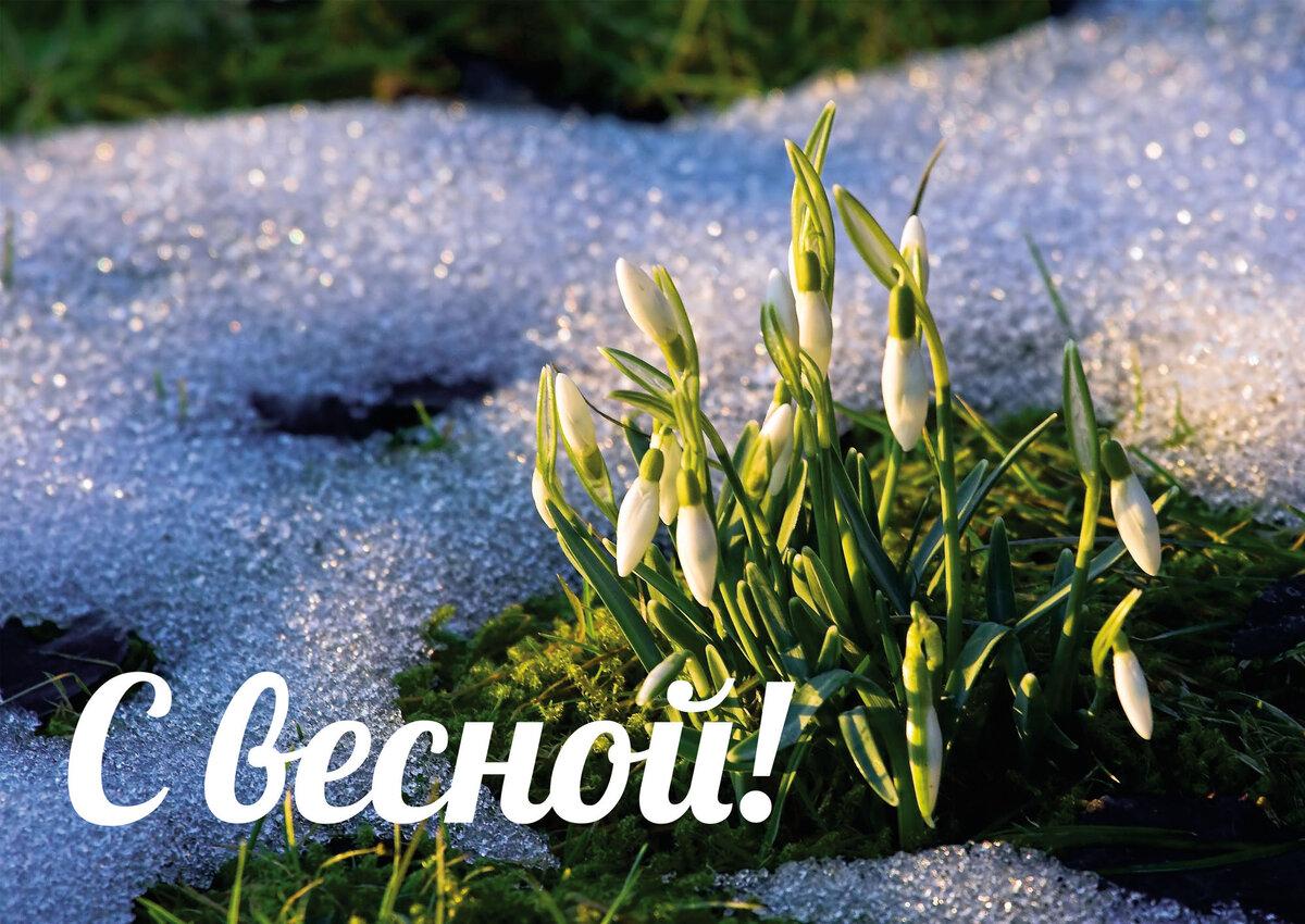 Сделать, открытка поздравление весны