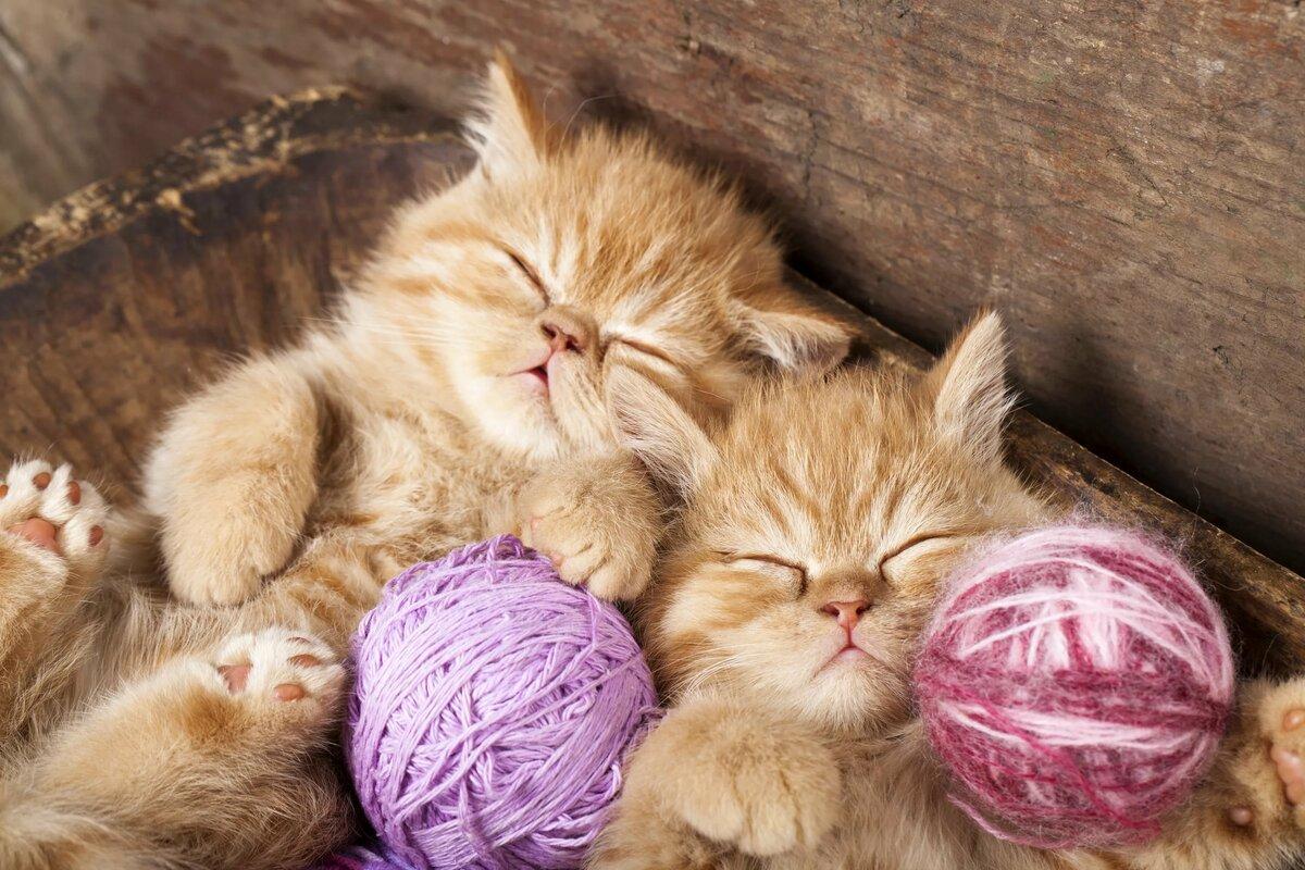 картинки кошаки и котята это последнее его