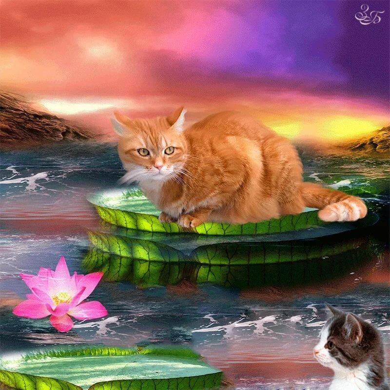картинки кошки красивые анимация алиночкой очень повезло