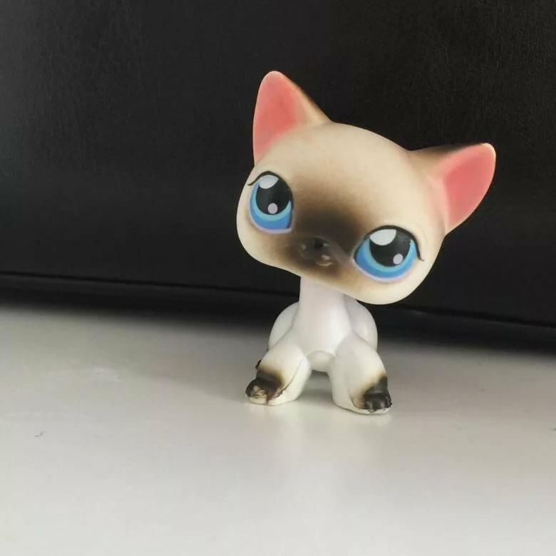 картинки сиамских кошек лпс привлекательным будет маникюр